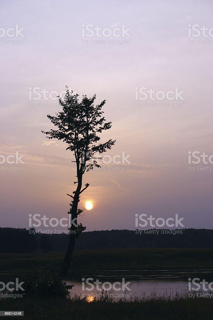 Sylwetka drzewa z nadchodzących sun zbiór zdjęć royalty-free