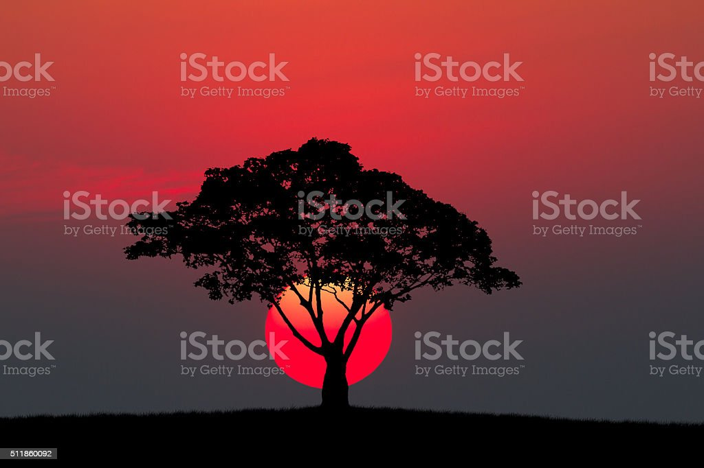 Silhouette of a tree and meadow with sunset stock photo