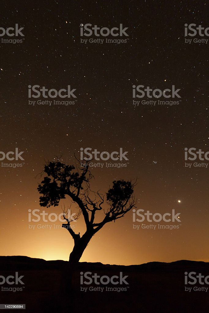 Silhouette of a tree during an orange dusk royalty-free stock photo