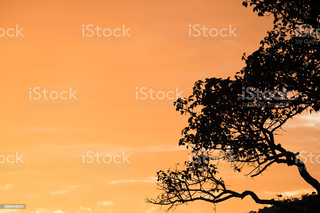 Silhouette of a tree with the sun behind the tree stock photo