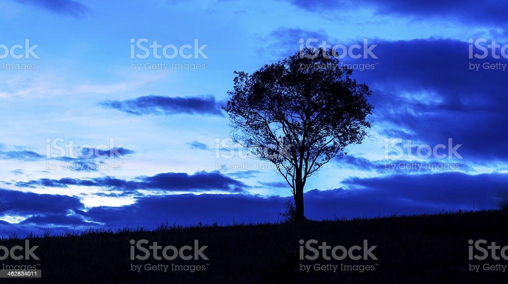 Silhouette of a tree,Khao Yai National Park Thailand stock photo