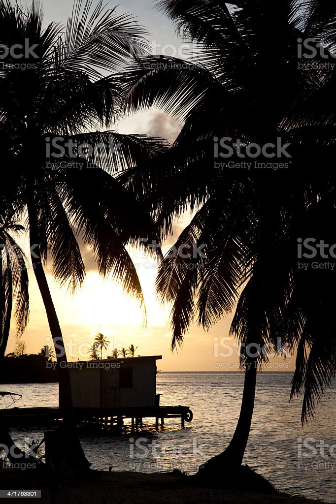 Silhouette of a tropical beach royalty-free stock photo