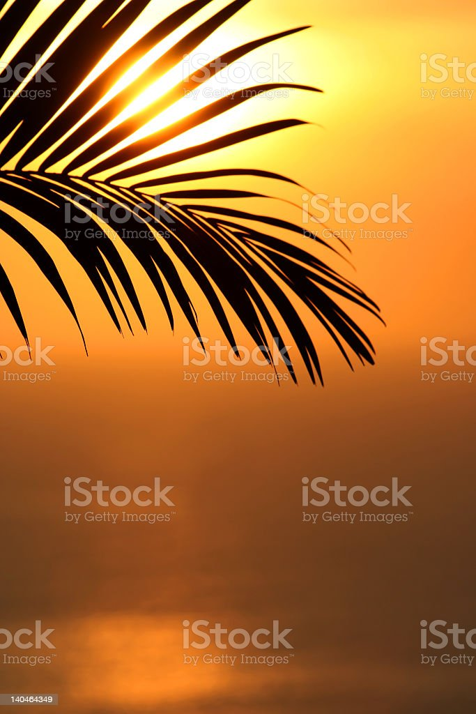 Silhouette of a tropical Palm leaf during sunset royalty-free stock photo