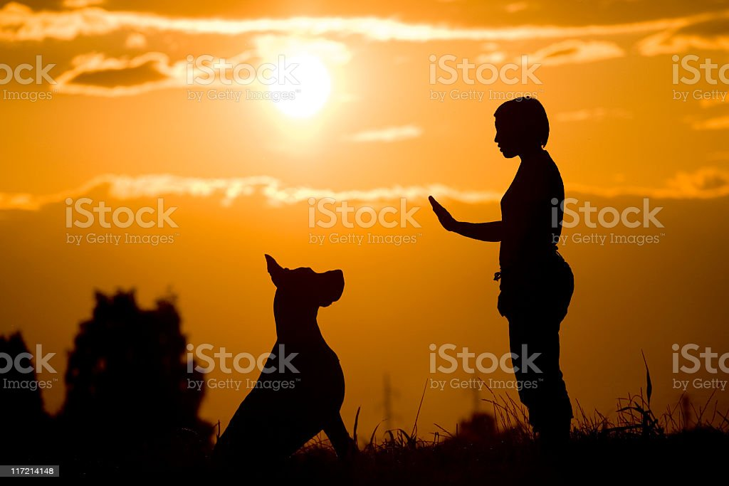 Silhouette of a woman training a dog in the sunset royalty-free stock photo