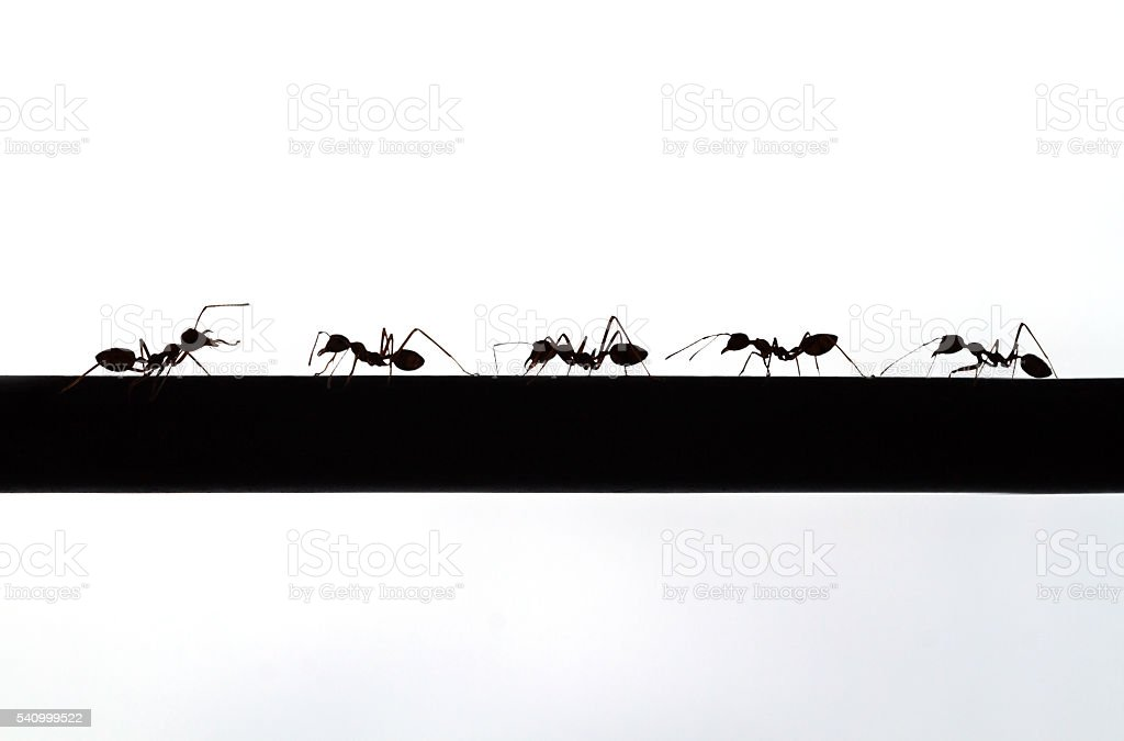 silhouette of ant stock photo