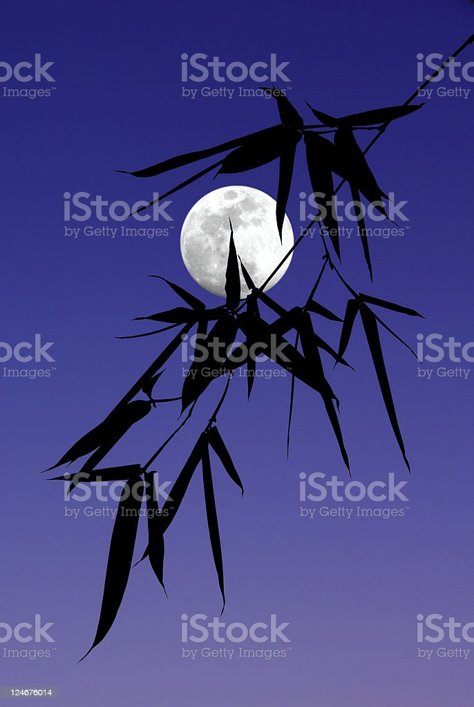 Silhouette of Bamboo Leaves stock photo