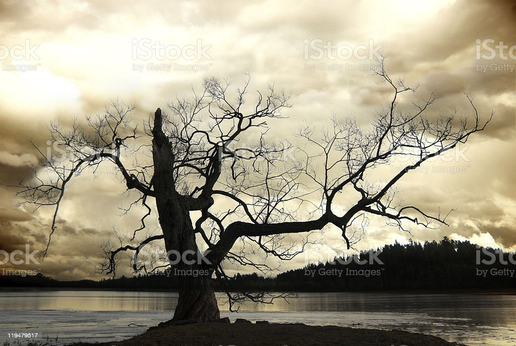 Silhouette of bare tree royalty-free stock photo