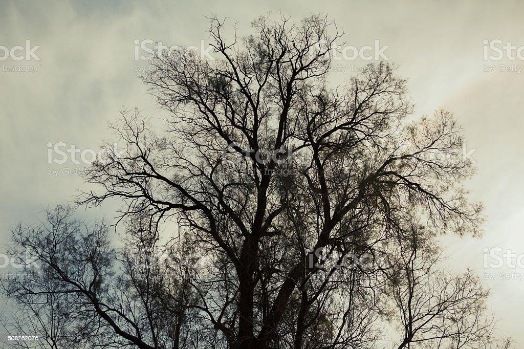 Silhouette of bare tree stock photo