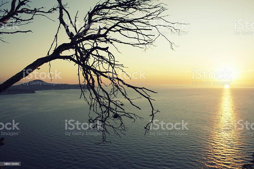 Silhueta de estéril, leafless Árvore durante o nascer do sol sobre o mar Mediterrâneo foto de stock royalty-free