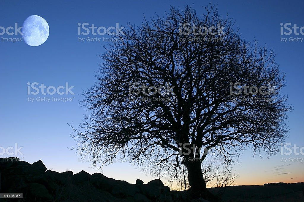 Silhouette of big tree with full moon in sky at twilight stock photo