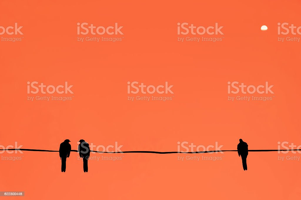 Silhouette of birds at sunset time. stock photo