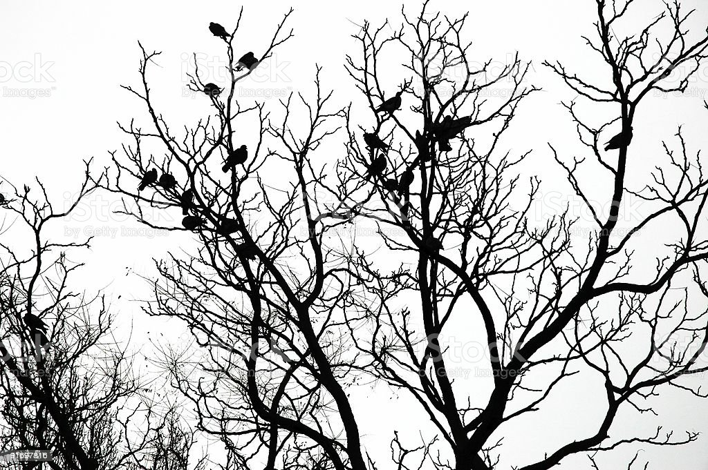 Silhouette of birds on the tree royalty-free stock photo