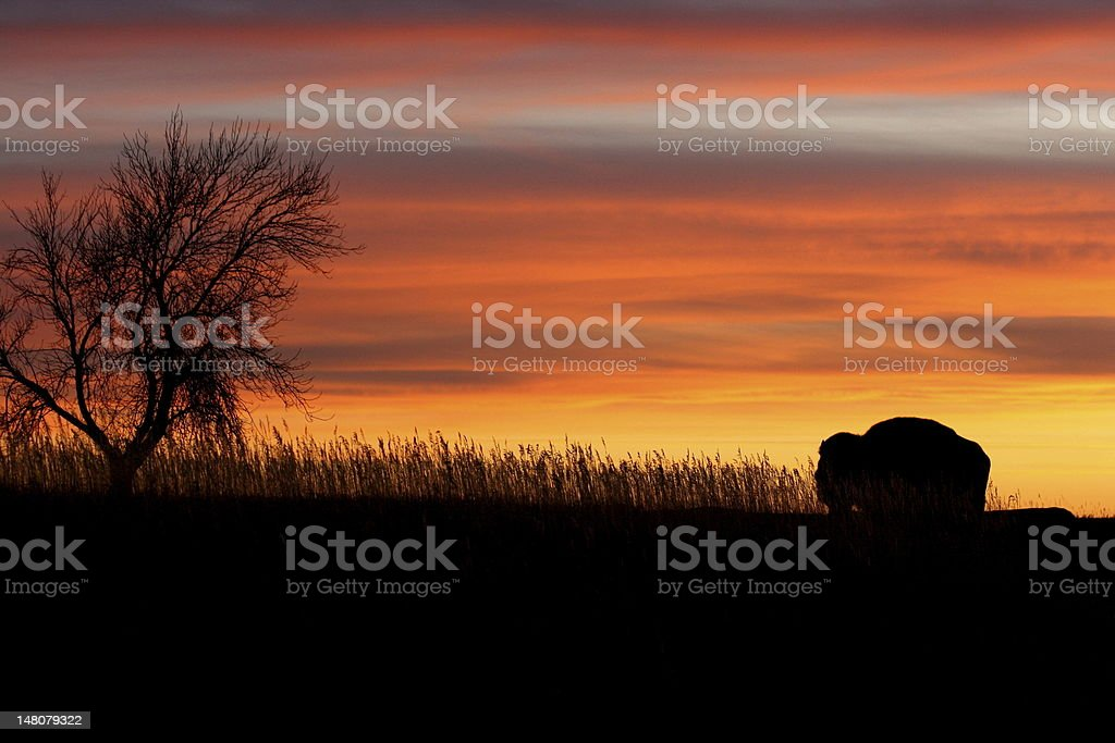 Silhouette of bison and tree at sunset. royalty-free stock photo