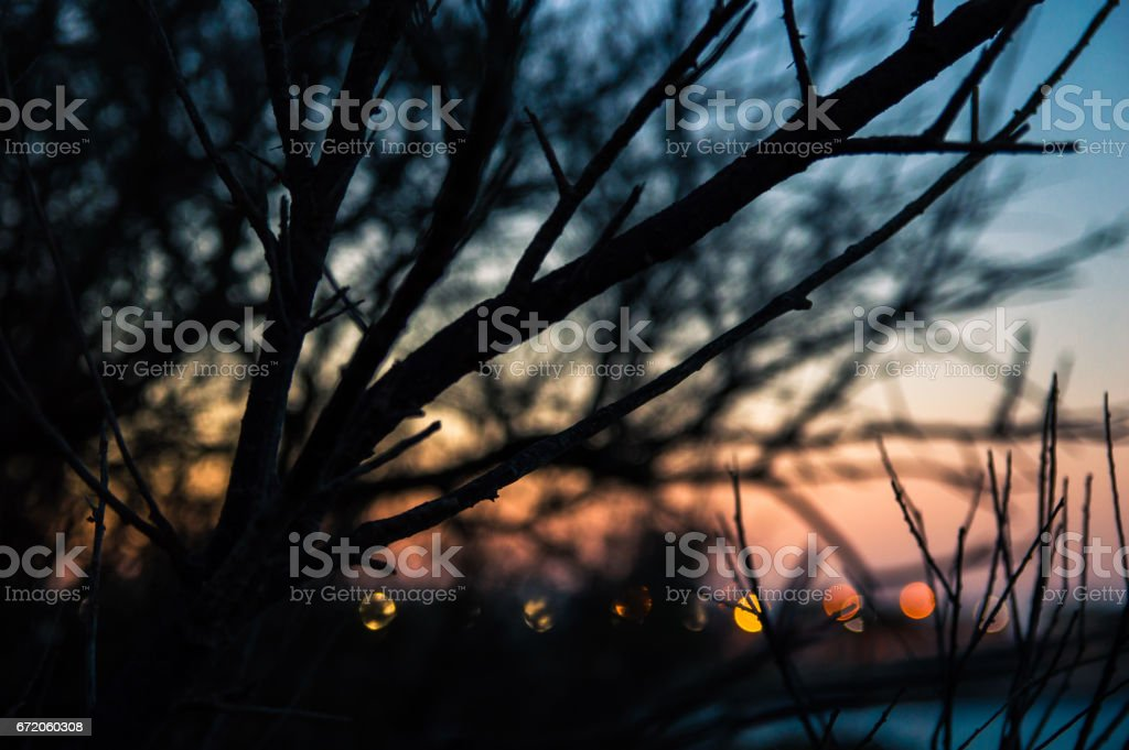Silhouette of branches against the sky and city lights stock photo