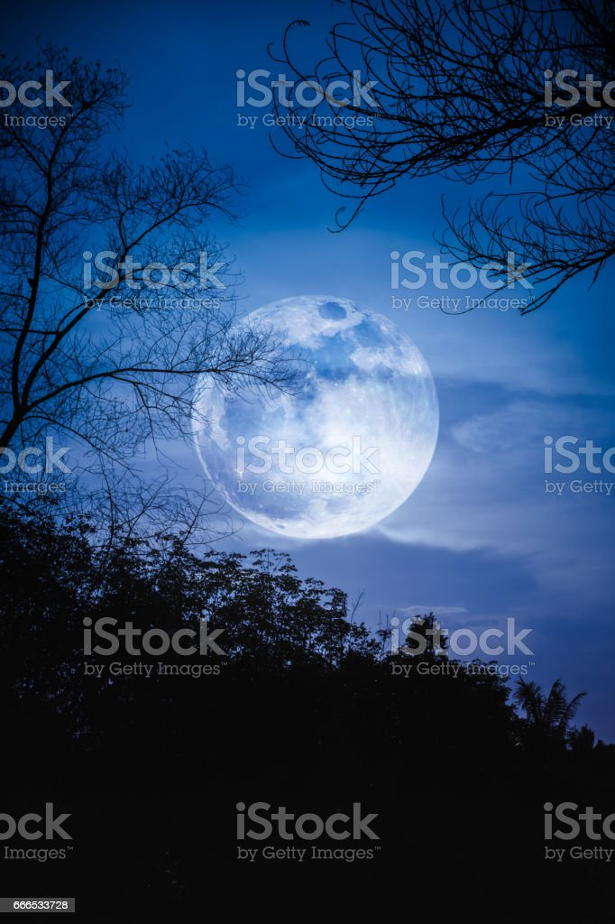Silhouette of branches of trees, night sky with full moon. stock photo