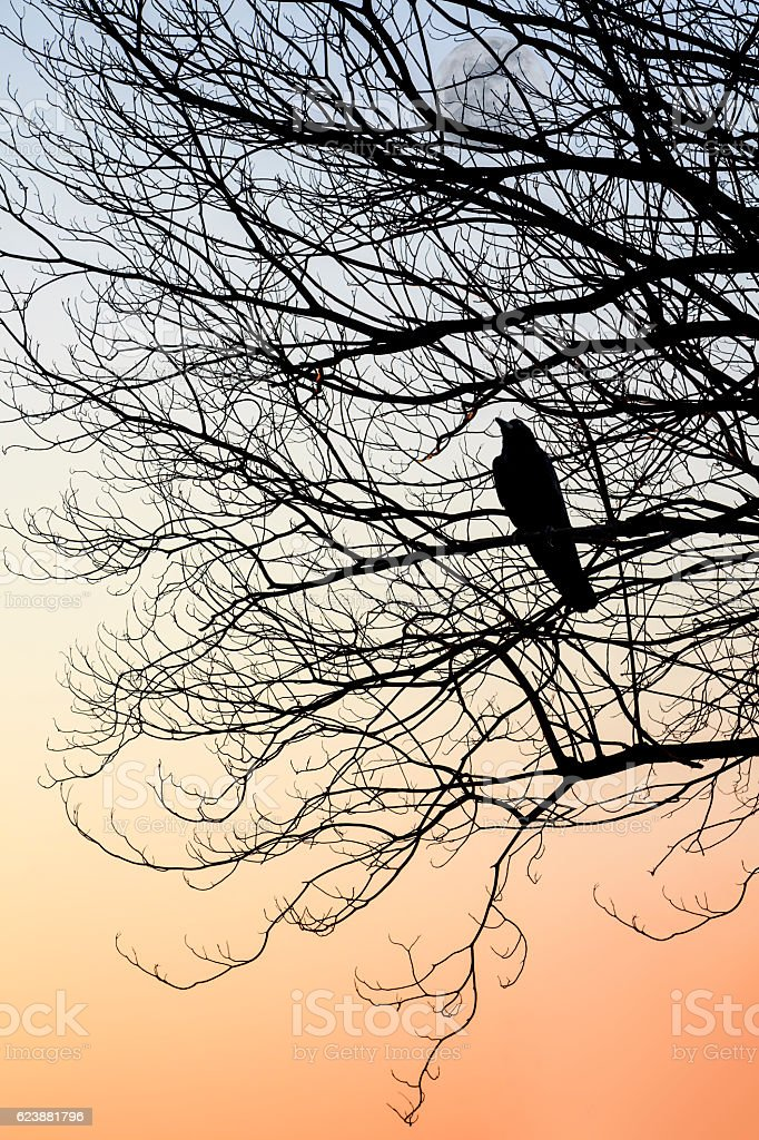 silhouette of crow perch on tree branches with sunshine stock photo