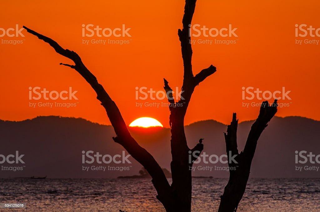 Silhouette of dead trees with sun rise stock photo