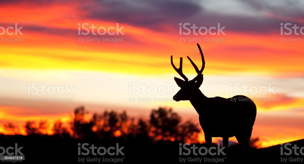 Silhouette of Deer on the Great Plains stock photo
