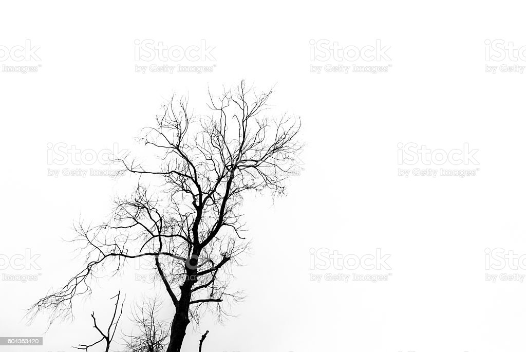 Silhouette of dried tree stock photo