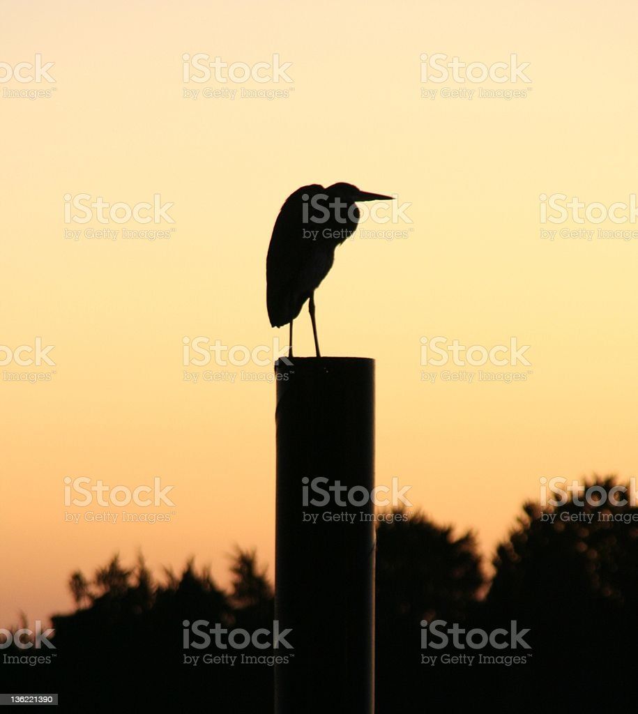 Silhouette of Egret on Dock at Sunset royalty-free stock photo