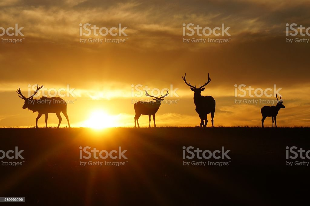 Silhouette of Elks stock photo