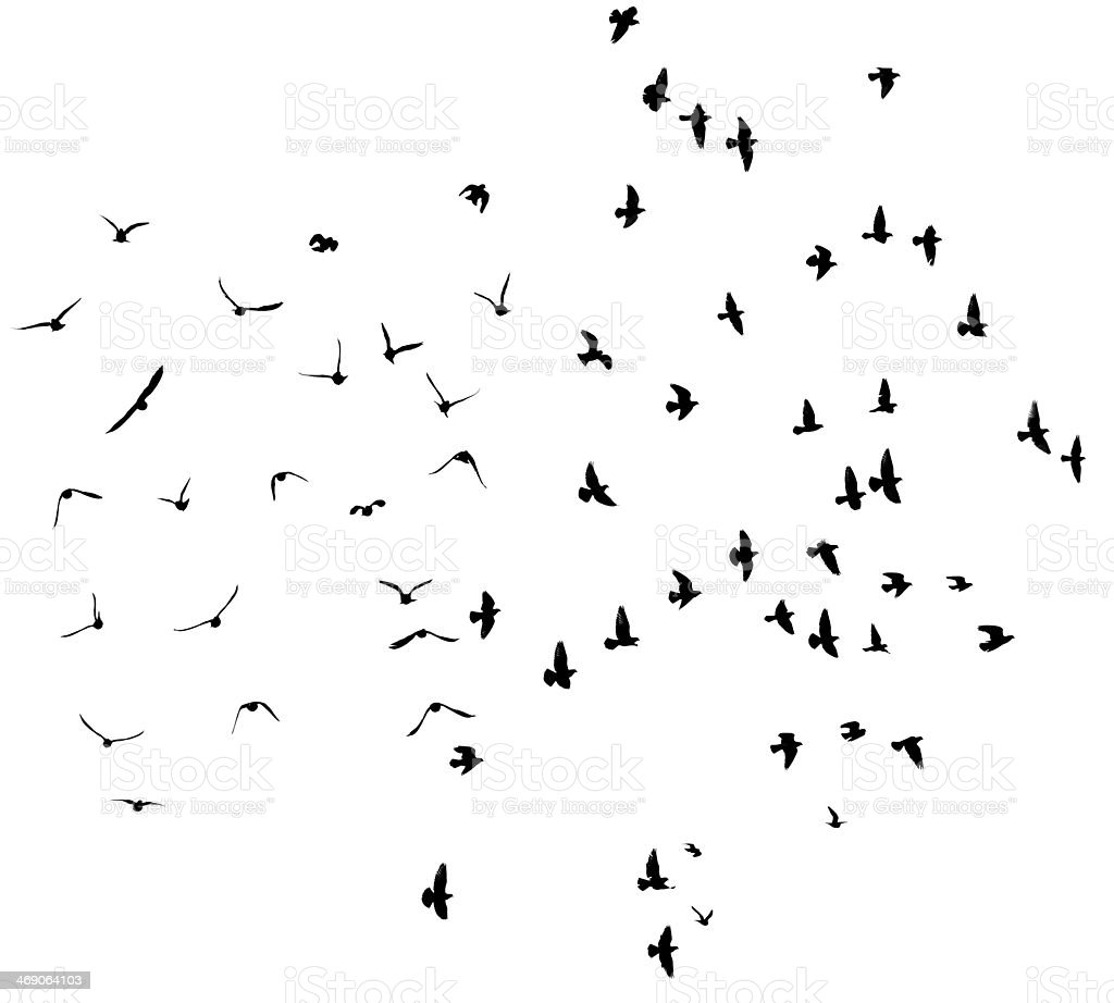 Silhouette of flying pigeons. stock photo