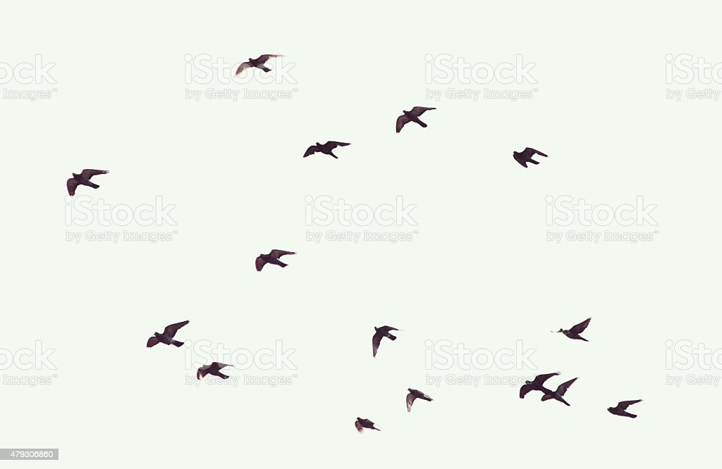 Silhouette of flying pigeons stock photo