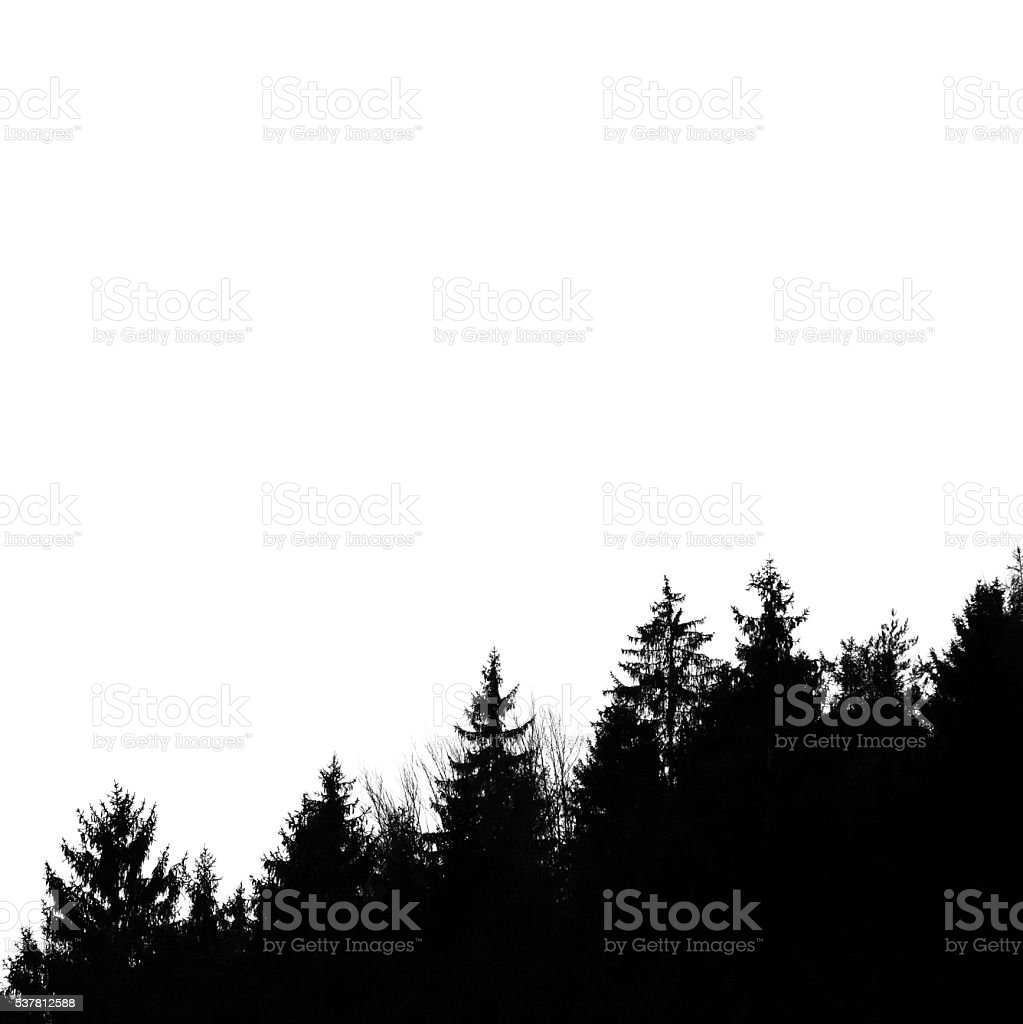 Silhouette of forest, isolated on square background, copy space stock photo