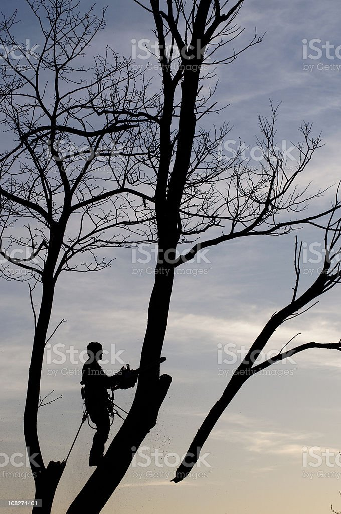 Silhouette of Forestry Worker Cutting off Tree Limbs royalty-free stock photo