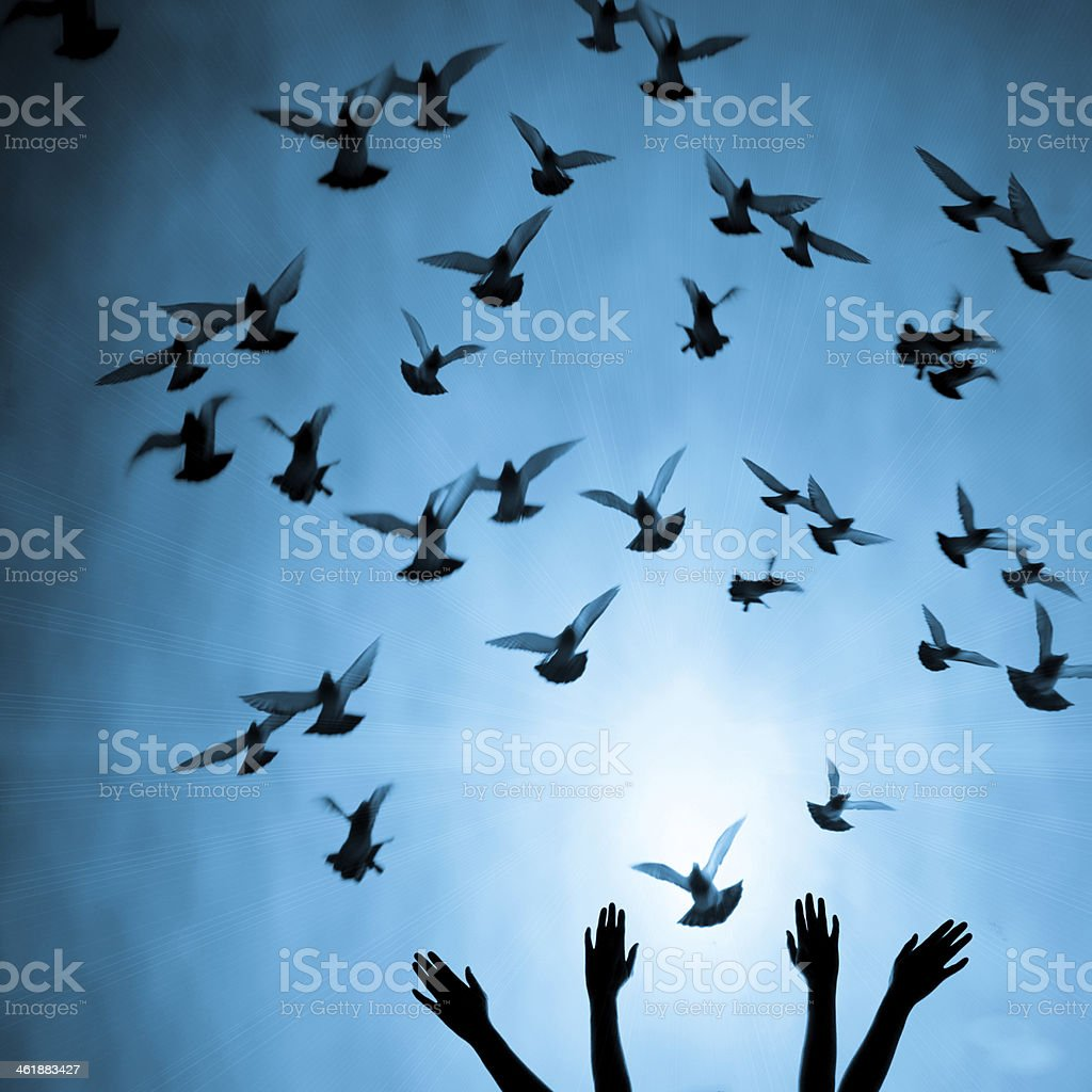 Silhouette of four female hands reaching up to many doves stock photo