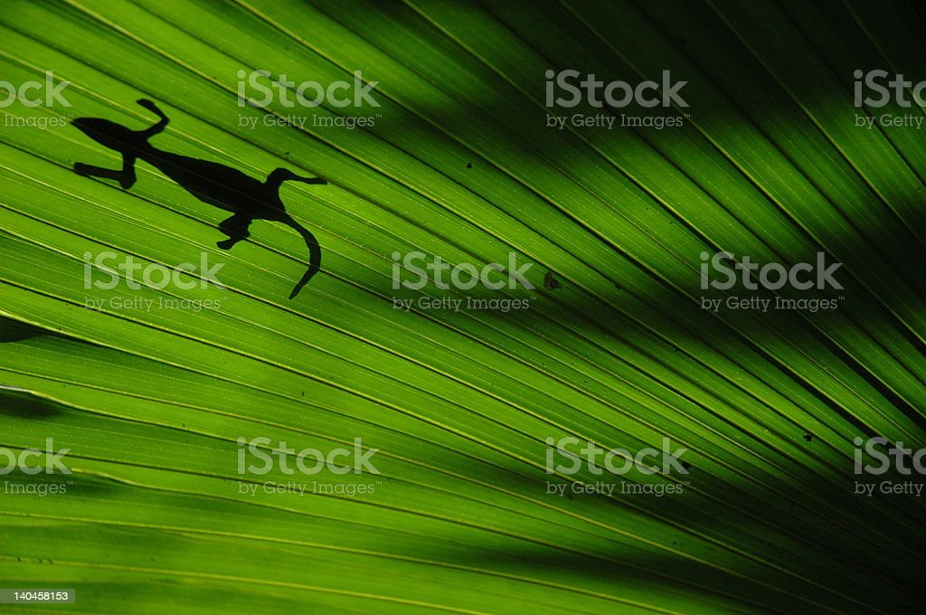Silhouette of gecko on a leaf royalty-free stock photo