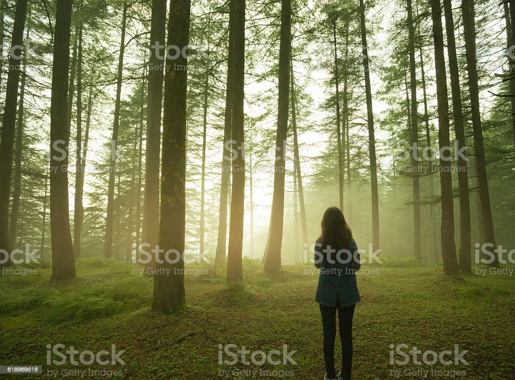 Silhouette of girl standing alone in pine forest at twilight. stock photo