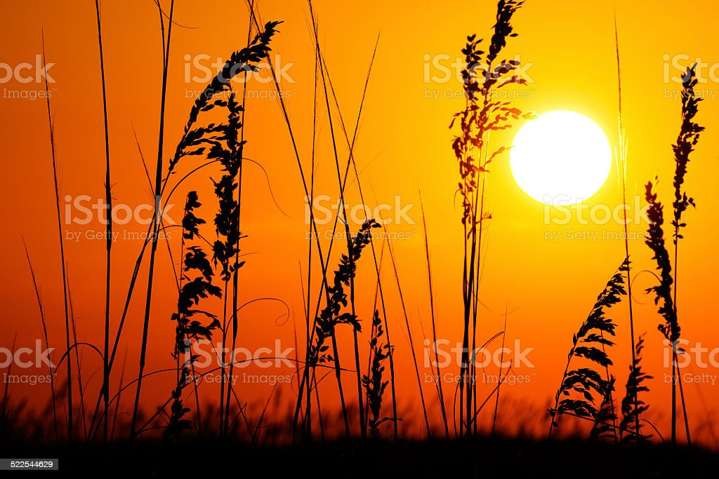 Silhouette of Grass during Sunrise at the Beach stock photo