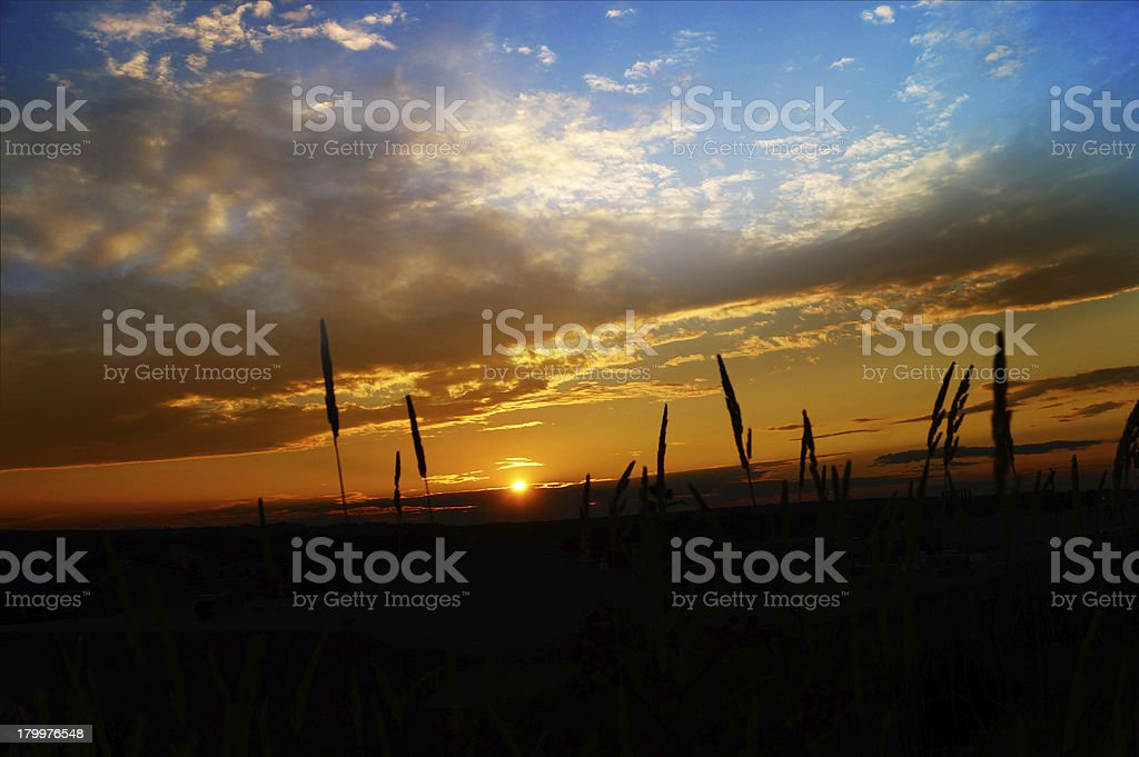 Silhouette of Grass Flowers with twilight background royalty-free stock photo