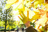 Silhouette of hand on the yellow leaves