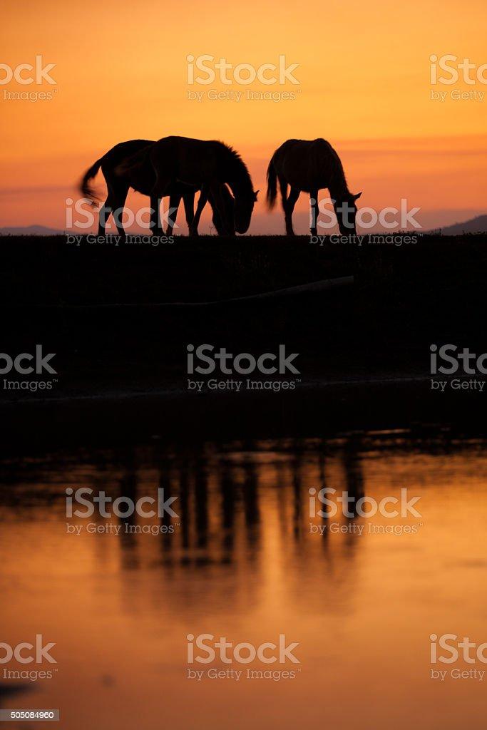 silhouette of horse  with orange sunny sky stock photo