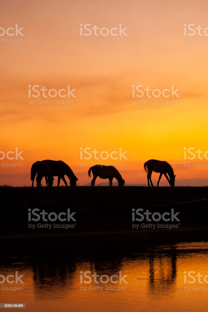 silhouette of horse  with orange sunny sky stock photo
