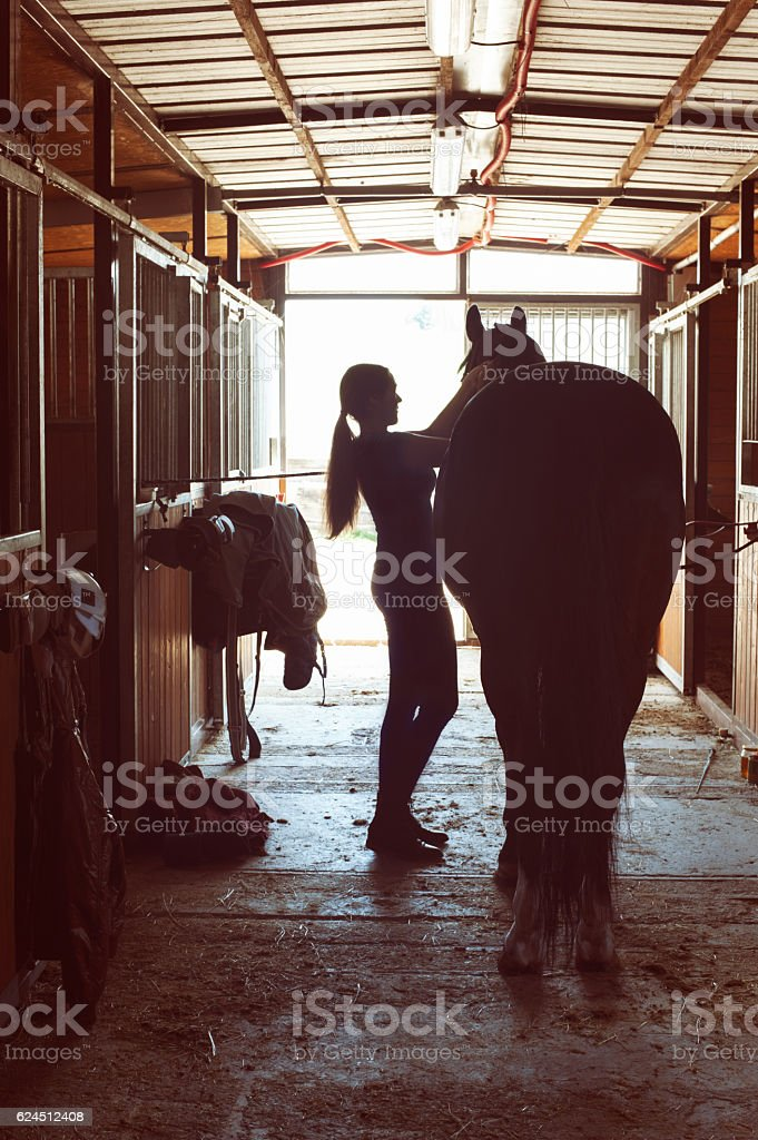Silhouette of horsewomen owner harnessing the stallion in stable stock photo