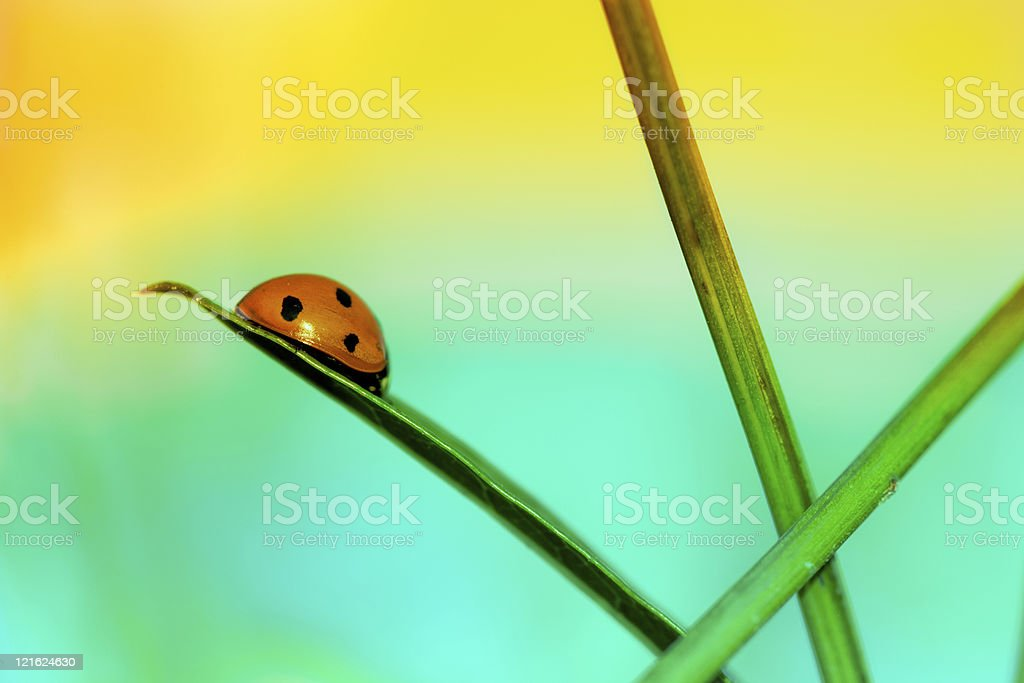 Silhouette of ladybug sitting on wildflower during sunset royalty-free stock photo