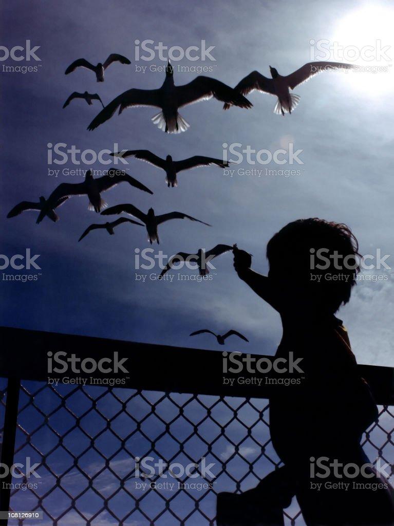 Silhouette of Little Boy Feeding Seagulls royalty-free stock photo