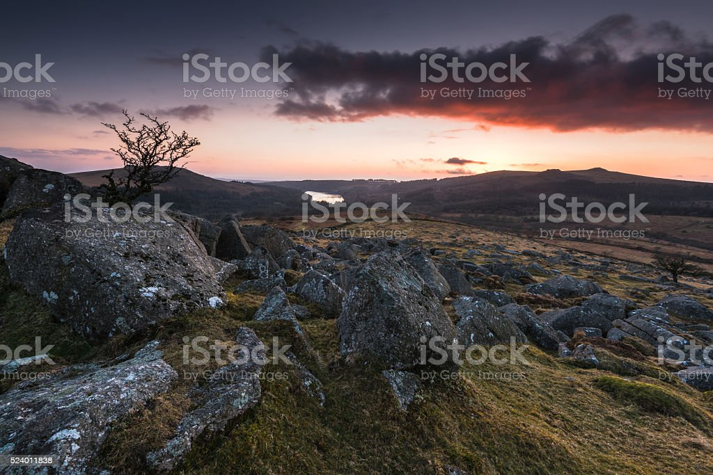 silhouette of lonely tree at sunset in mountains stock photo