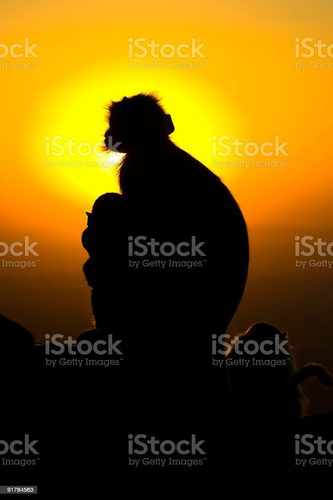 Silhouette of monkey mom and baby against sunset royalty-free stock photo