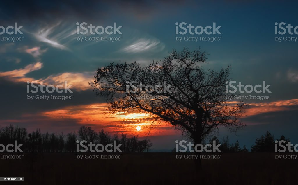 Silhouette Of Oak At Sunset stock photo