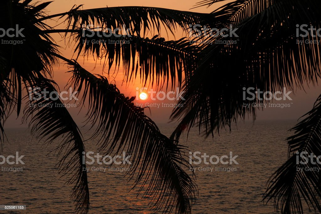 silhouette of palm leaves on the ocean background on sunset royalty-free stock photo