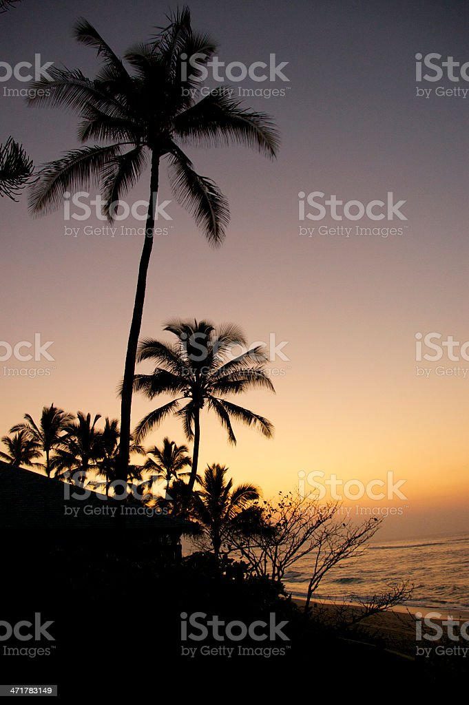 silhouette of palm tree royalty-free stock photo
