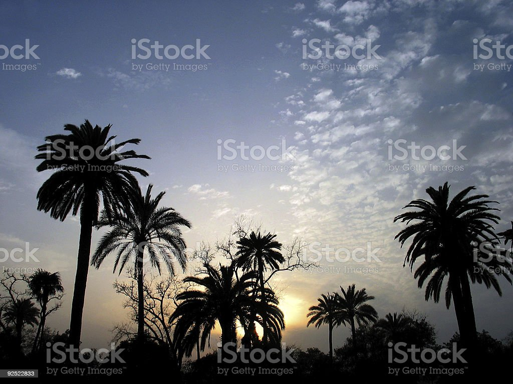 Silhouette of palm trees at sunset royalty-free stock photo