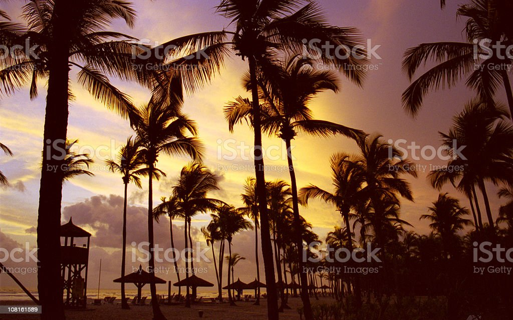 Silhouette of Palm Trees on Beach, Sunset at Ivory Coast stock photo