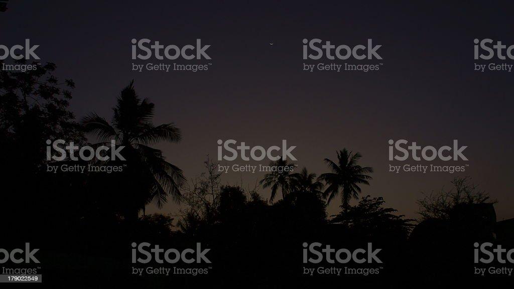 Silhouette of palm trees, Repalle, Guntur District, Andhra Pradesh, India stock photo