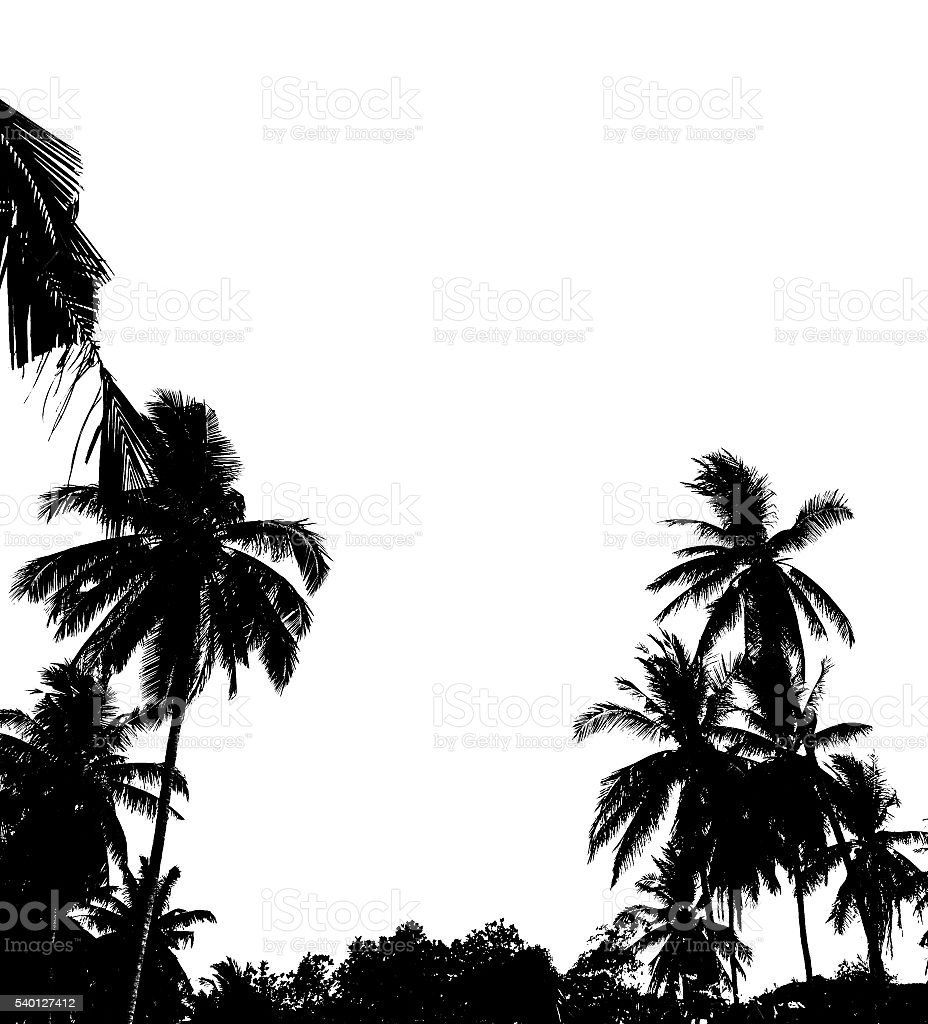 Silhouette of palms isolated on white background stock photo