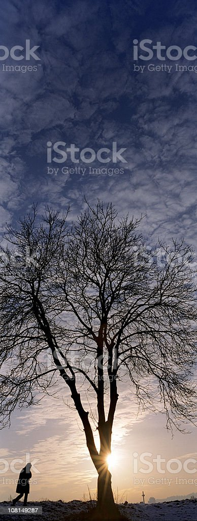 Silhouette of Person Walking by Tree at Sunset royalty-free stock photo